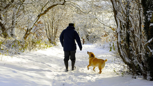 A man walks his dog through snow covered woodland at Sutton Bank