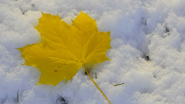 A leaf is seen on snow covered ground in Helmsley, northern England
