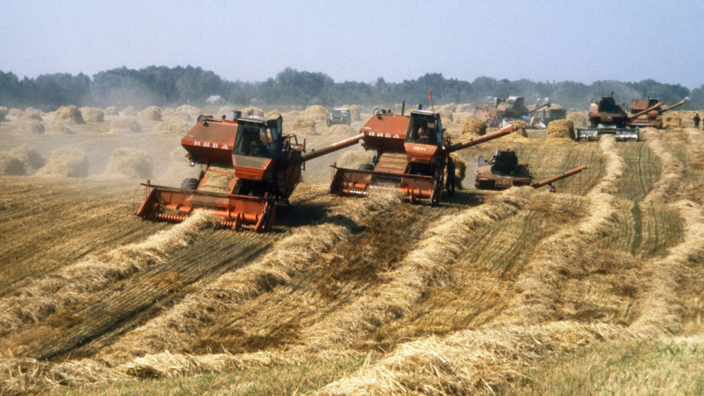 Field Of Dreams? 7 Reasons Why You Don't Want To Be A ...  |China Farmland